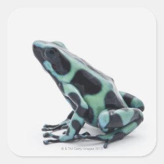 De zwarte en Groene Kikker van het Pijltje van het Vierkant Sticker