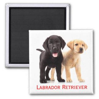 De zwarte Gele Hond van het Puppy van de Labrador Vierkante Magneet