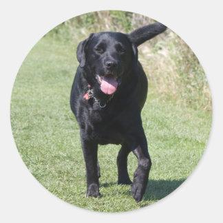 De zwarte hond van de labrador, mooie foto ronde sticker