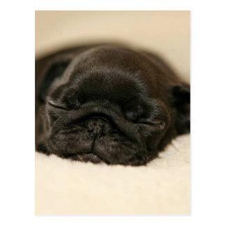 De zwarte Pug Slaap van het Puppy Briefkaart