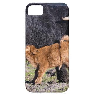 De zwarte Schotse koe en de jongelui van de Barely There iPhone 5 Hoesje