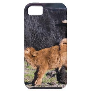 De zwarte Schotse koe van de Hooglandermoeder met Tough iPhone 5 Hoesje