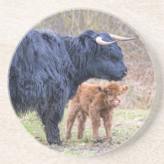De zwarte Schotse koe van de Hooglandermoeder met Zandsteen Onderzetter