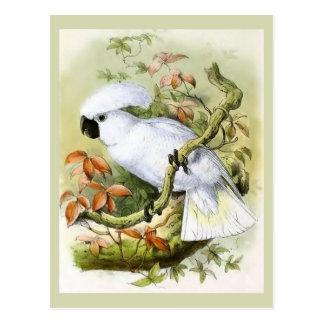 De zwavel-kuif Vintage Illustratie van de Kaketoe Briefkaart
