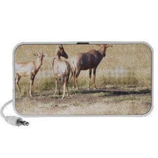 Deers Mini Speakers