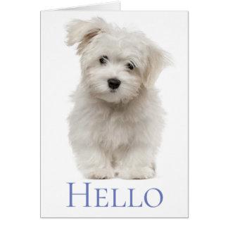 Denken van de Hond van het Puppy van Hello het Kaart