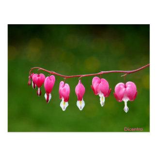 Dicentra - het Roze BloemenBriefkaart van de Vorm Briefkaart