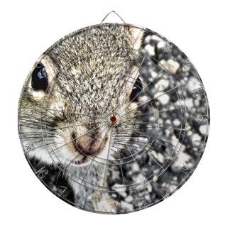 Dichte Omhooggaand van de eekhoorn! Dartbord