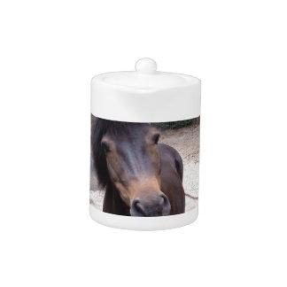 Dier, Paard, Pony