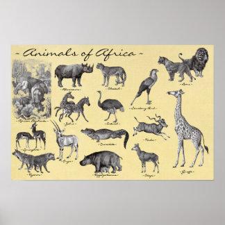 Dieren van het Poster van Afrika