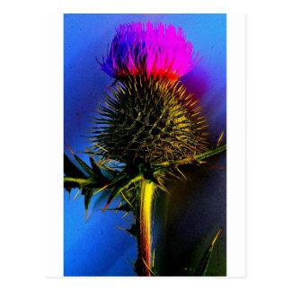 Distels, de bloem van Schotland Briefkaart