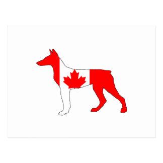 Doberman Canada Briefkaart