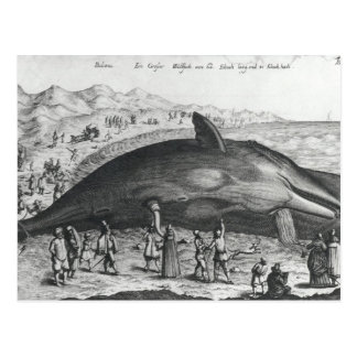 Dode walvis briefkaart