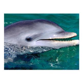 dolfijn briefkaart