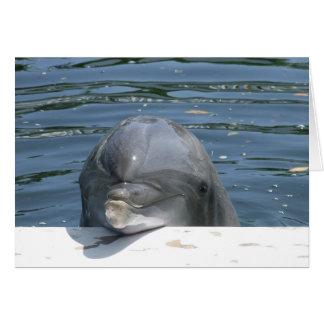 Dolfijn Briefkaarten 0