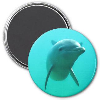 Dolfijn Koelkast Magneetjes