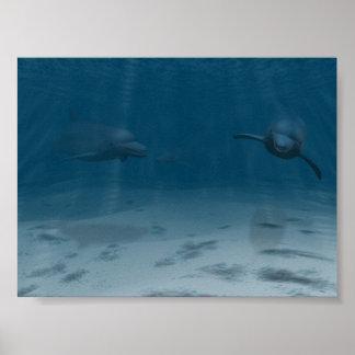 Dolfijnen bij Spel Poster