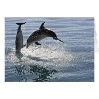 dolfijnvissen die - lege kaart spelen
