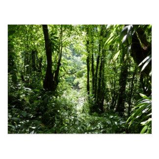 Dominicaans Regenwoud II Tropische Groen Briefkaart
