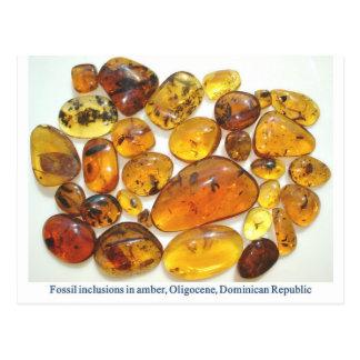 Dominicaanse amber met diverse insectopneming briefkaart