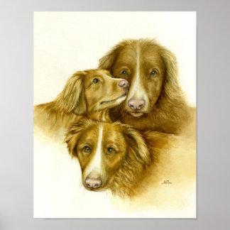 Drie Honden van de Retriever van Tolle van de Eend Poster