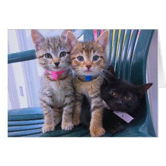 Drie Katjes Briefkaarten 0