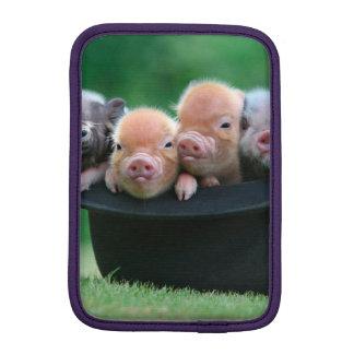 Drie kleine varkens - drie varkens - varkenspet
