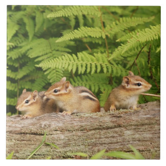 Drie Leuke Aardeekhoorns van het Baby Keramisch Tegeltje