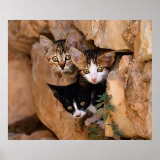 Drie leuke nieuwsgierige katjes poster
