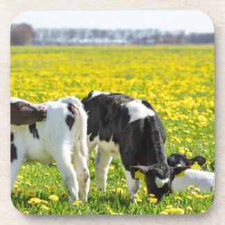 Drie pasgeboren calfs in de weide van de onderzetter