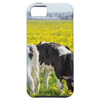 Drie pasgeboren calfs in de weide van de tough iPhone 5 hoesje