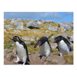Drie Pinguïnen van Strikken Briefkaart