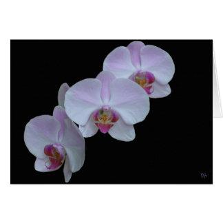 Drie Wenskaarten van de Orchidee