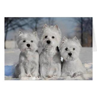 Drie Westies in de Sneeuw Kaart