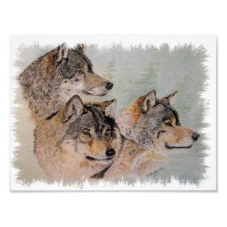 drie wolven foto kunst
