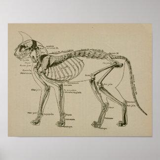 Druk van de Anatomie van het Skelet van de kat de Poster