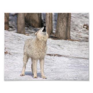 Druk van de Fotografie van de Wolf van het hout de Foto Afdruk