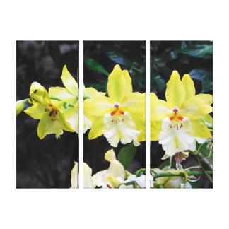 Druk van het Canvas van de orchidee de Trio
