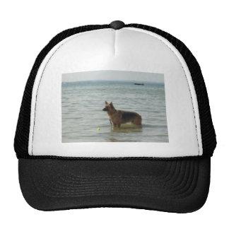 Duitse herder bij het Strand Pet