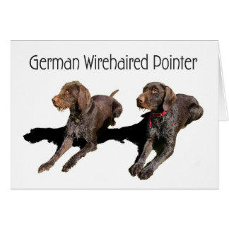 Duitse Wirehaired Wijzer Briefkaarten 0