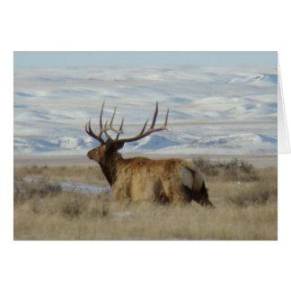 E0022 de Elanden van de Stier in Sneeuw Briefkaarten 0