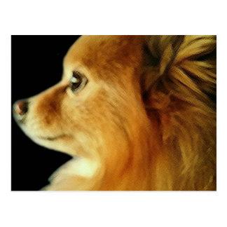 Eagle Eyed Pomeranian Briefkaart