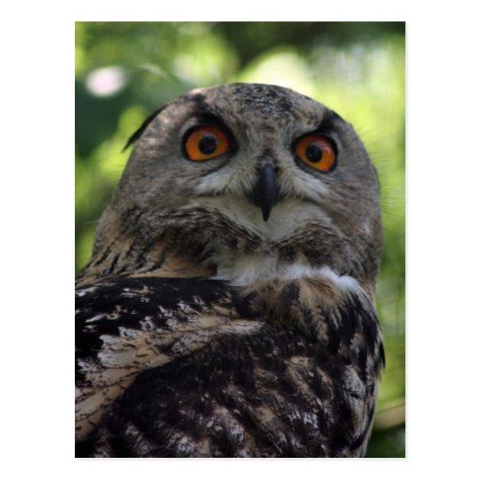 Eagle-owl Briefkaart