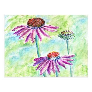 Echinacea, waterverfpotlood briefkaart