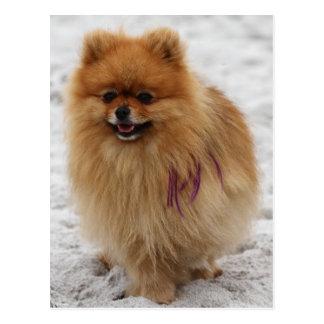 Edgrrrr #2 - Pomeranian Briefkaart