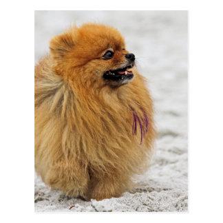 Edgrrrr #3 - Pomeranian Briefkaart