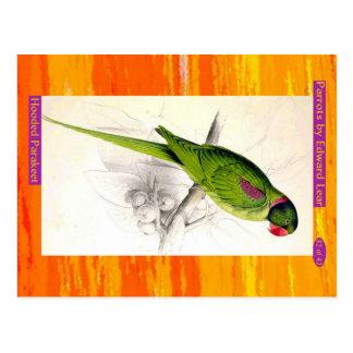 Edward Lear. Parakeet. met een kap Briefkaart