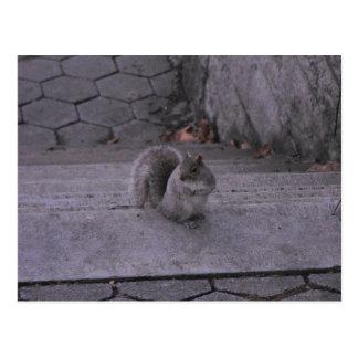 Eekhoorn Briefkaart