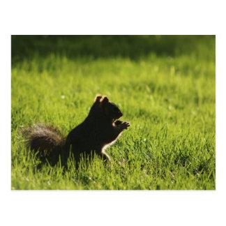 eekhoorn die eikel op groene grasnatuur eet briefkaart