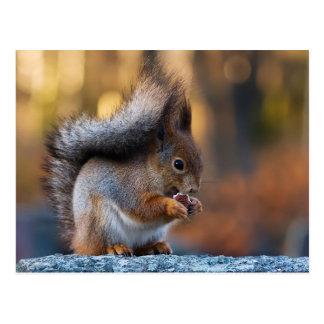 Eekhoorn die koekje eten briefkaart